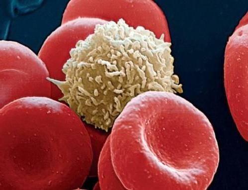 kako su bijele krvne stanice obilježene testom krvi kod djece