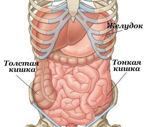 kako provjeriti tankog crijeva