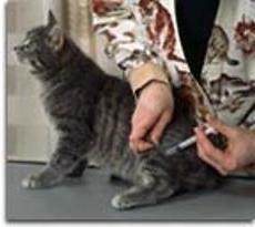 Kako staviti ubod u mačku