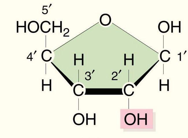 Struktura i funkcije tRNA