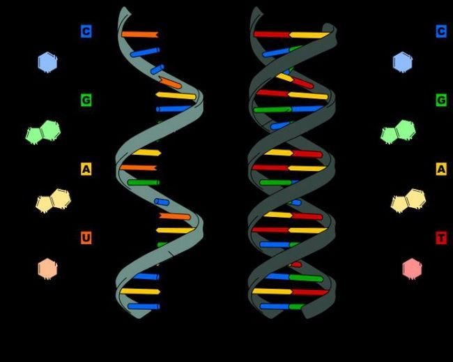 Struktura sekundarne strukture RNA