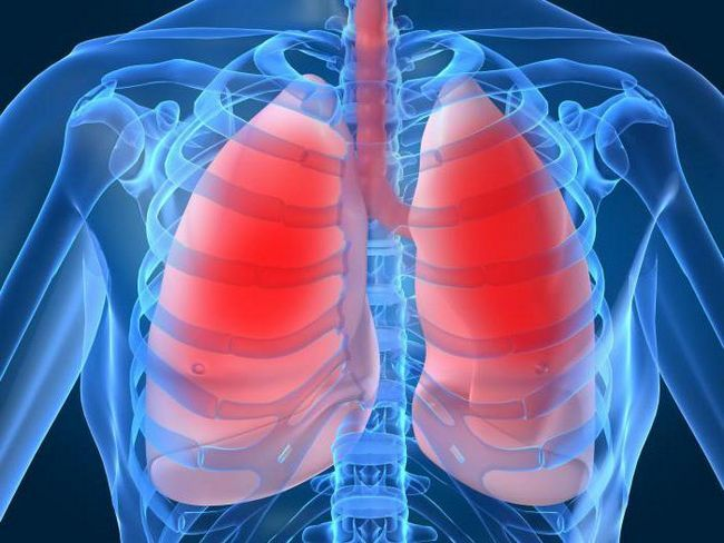 kako su pluća postavljena