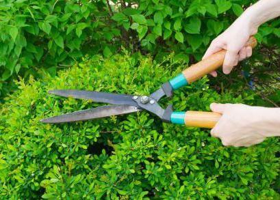 Vrtni škare za grmlje