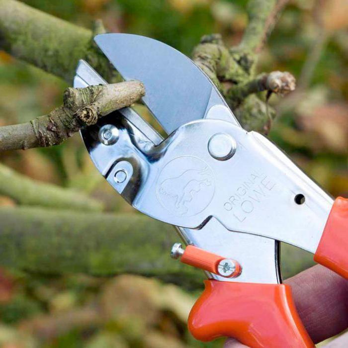 Vrtni škare za drveće