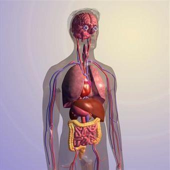 Mjesto organa