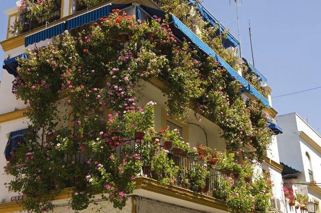 Što cvijeće biljka na balkonu cvjetati cijelo ljeto: imena