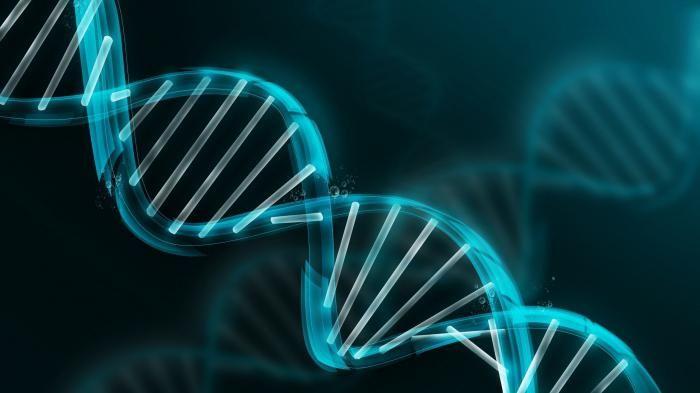 Ono što funkcionira u stanici izvodi se nukleinskim kiselinama