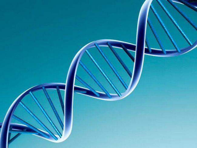 химический состав хромосом