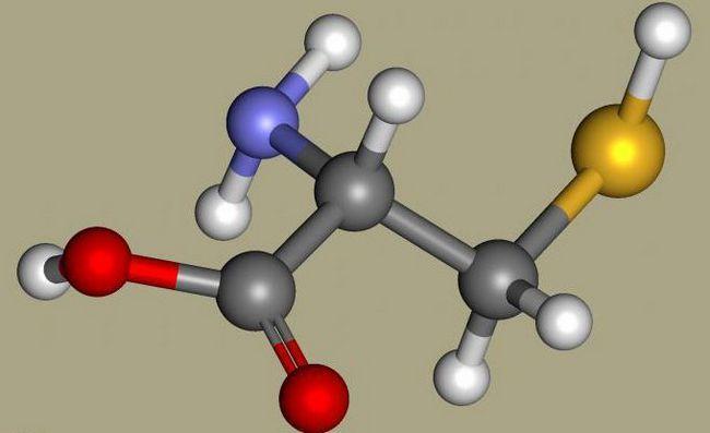 Opis biosinteze proteina