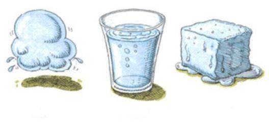 биологическая роль воды в клетке