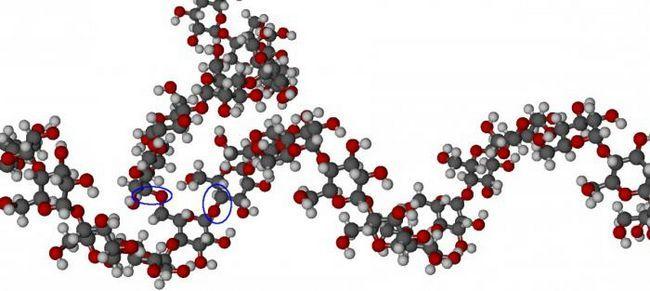 функции углеводов в клетке живых организмов
