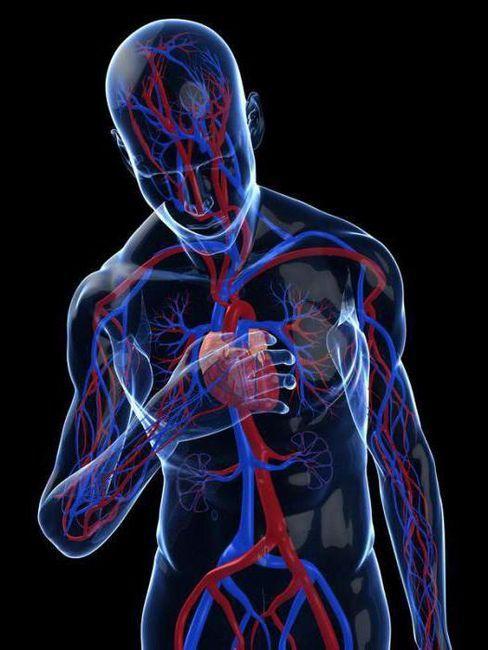 aritmije klasifikacije srca