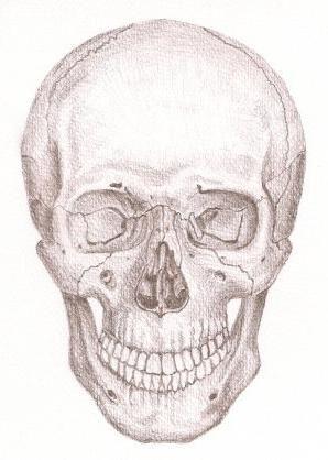 Kosti lubanje