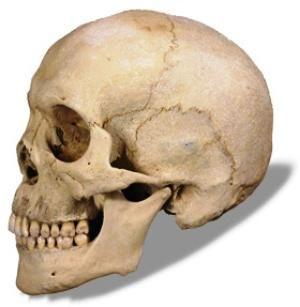 Dvostruke kosti lubanje