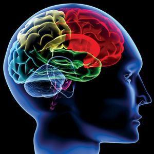 moždani korteks