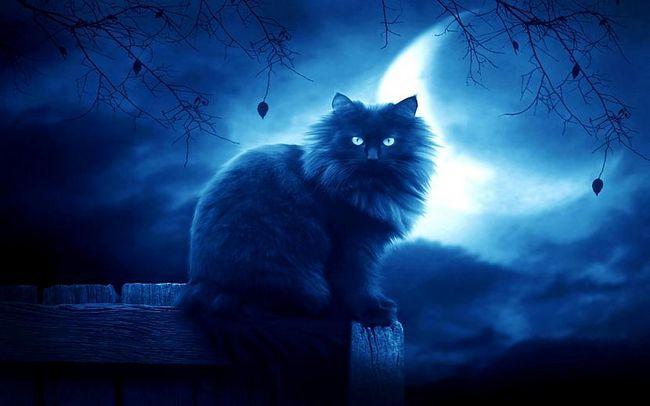 Mjesec i mačka