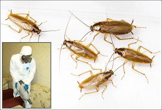 Mali bugovi u stanu: razlozi za nastup i načine borbe