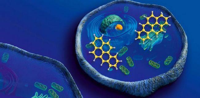 минеральные вещества клетки
