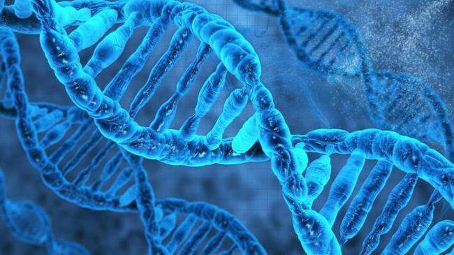 DNA monomera i njihovu strukturu