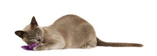 mogu li dati mačke valerian kad hodate