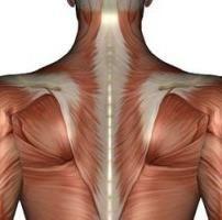 trapezijska funkcija mišića