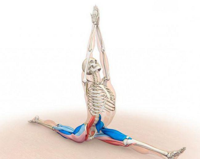 primjeri sinergističkih mišića