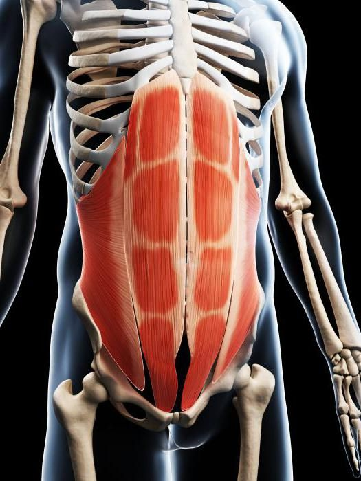 mišiće prtljažnika i vrata