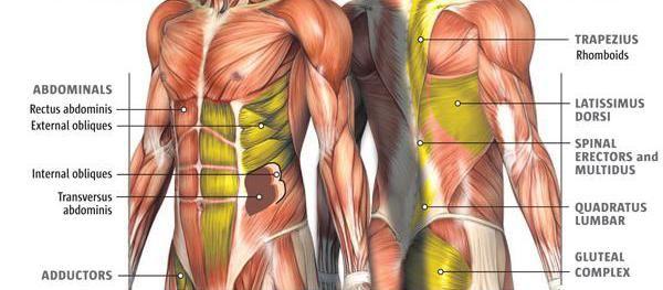 Sustav mišića