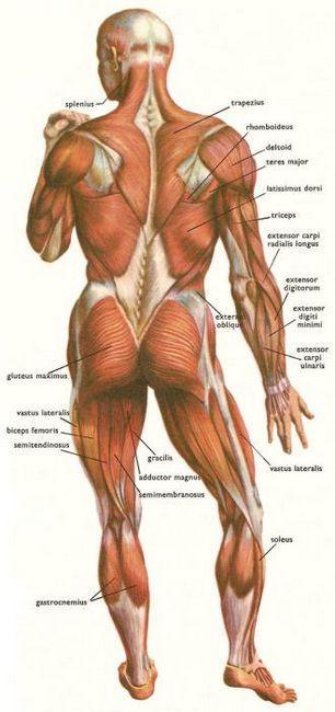 Lateralni mišići