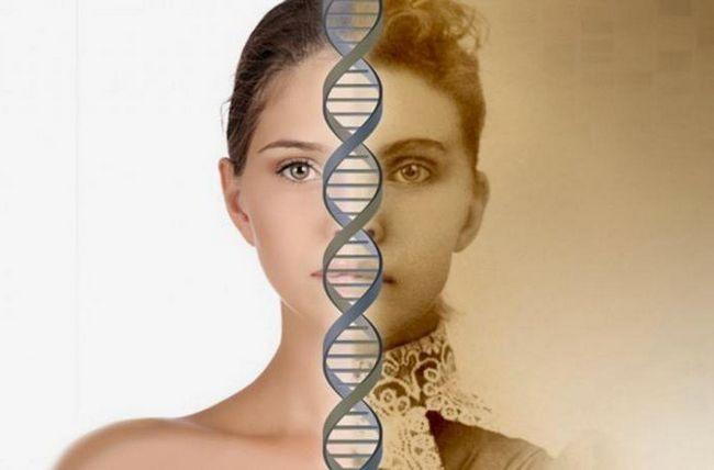 Kakvu ulogu igra molekula DNA u stanici?
