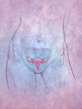 normalna veličina jajnika nulliparous žene