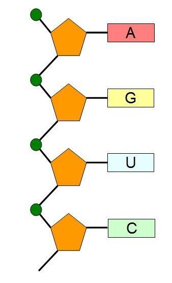 Sekvenca nukleotida u DNA lancu