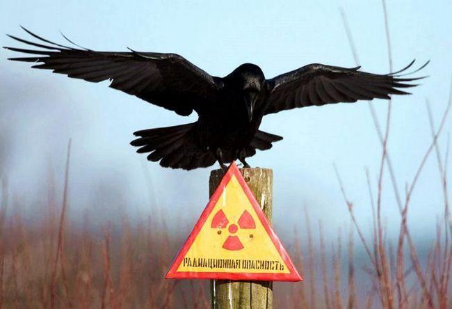 Opasnost od zračenja