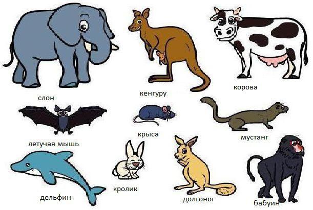 koje životinje imaju klasu 8 dijafragme