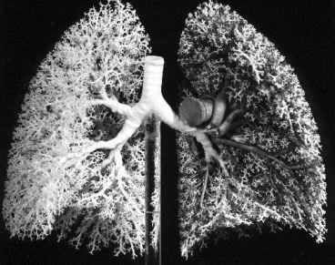 ljudski dišni sustav