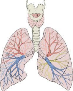 pregled dišnog sustava