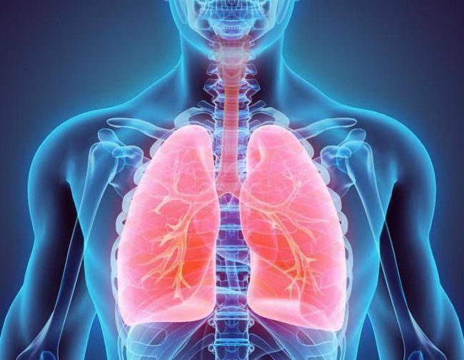u prsima šupljina su organi