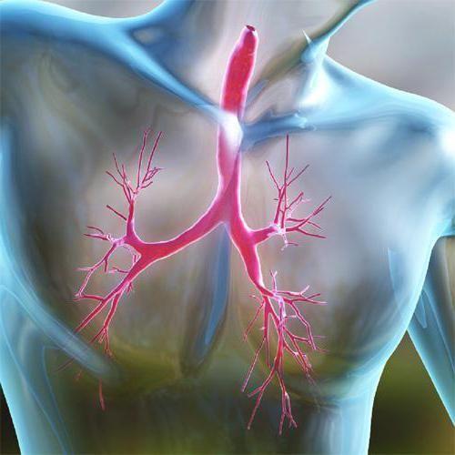 organa prsnog koša
