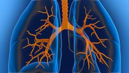 organa u prsnoj šupljini