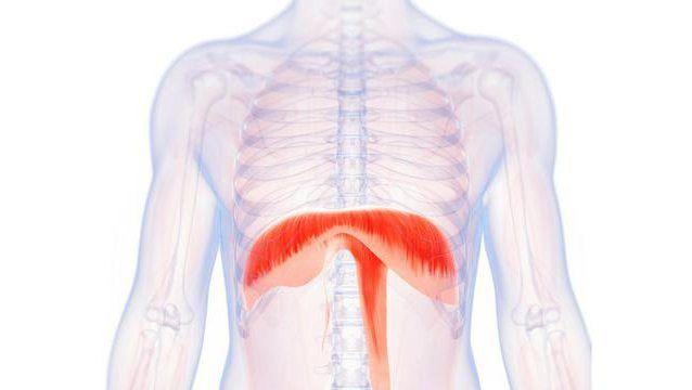 organa ljudske torakalne i abdominalne šupljine