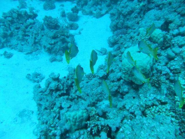 Odmorite se na Crvenom moru. Što je bolje, Hurghada ili Sharm el-Sheikh?