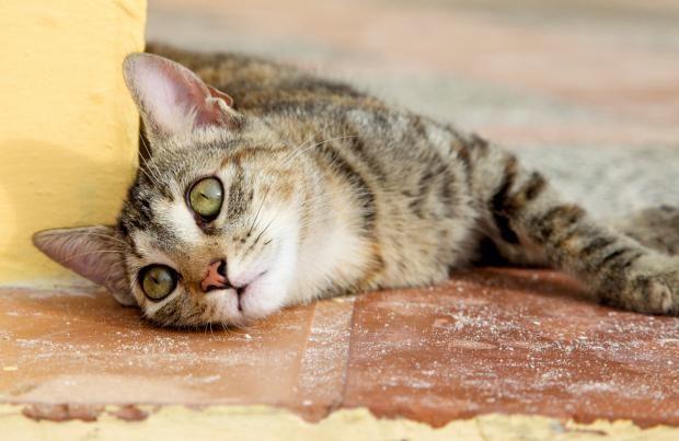 znakovi trovanja mačaka