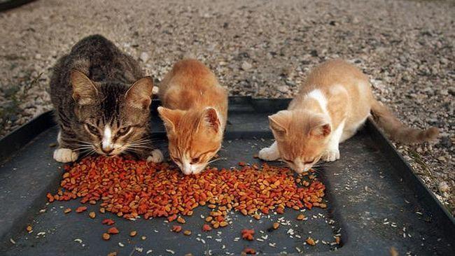 trovanje hranom u mačiću