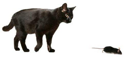 otrovanje sa štakorskim otrovom kod mačaka