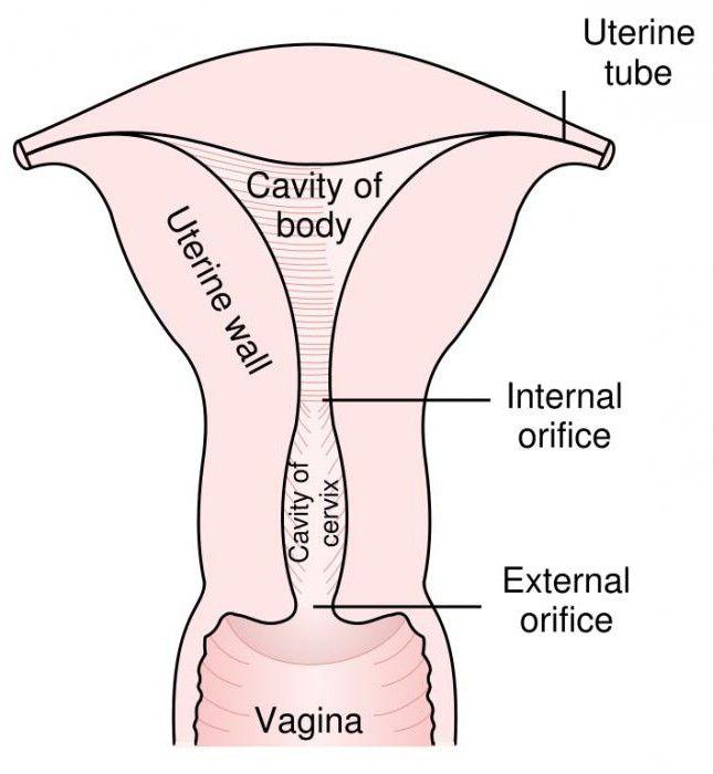 metoda provođenja biopsija endometrija kod žena