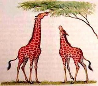 evolucijska teorija plusa i minusa