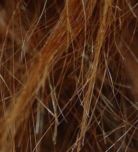 Čvrsto podijeljena kosa