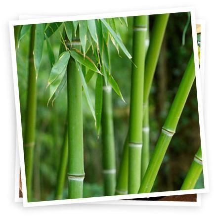 posteljina bambusa