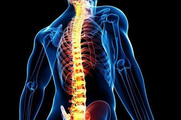 vertebralnog stupca