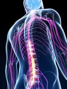 anatomije kralježnjaka